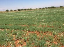 عرض مميز أراض زراعية للجادين بسعر مميز.