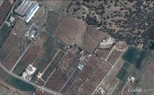 مزرعة 10200 م في تل الرمان الزغيبة الشرقية