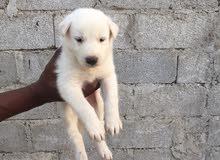 عمر الكلب شهرين