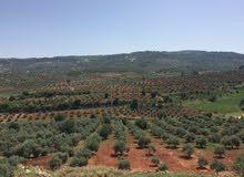 ارض زراعيه 24 دونم