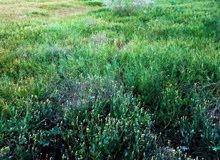 مزرعة أو حوازة للبيع مستعجل 3هكتار الا ربع بوادى الربيع ملك مقدس بالحجج