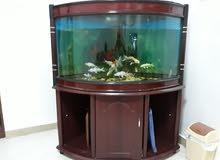 حوض سمك زاويه
