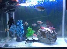 10 اسماك وسلحفاتين بحوض سمك كبير