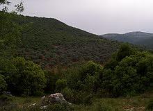 في الأردن و فلسطين  أراضي مختلفه بجميع المساحات 00962770492452
