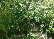 Villa for rent with More rooms - Irbid city Al Hay Al Janooby