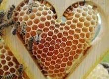 جميع انواع العسل بي اسعار ممتازا