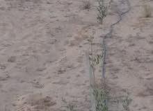 مدينة بدر  تحد الغطاء النباتي من الجنوب  ا