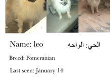 كلب مفقود ضايع / missing dog