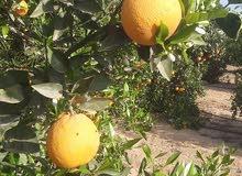 مزرعة للبيع في الاسماعيلية