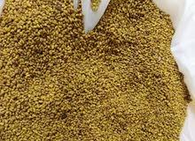 بذر عمانی قت اربعا سنوات