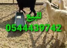 للبيع 0544439742
