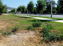 أرض للمشروع بناء على طريق كابو نيغرو