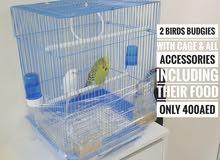 2 Birds Budgies (Female & Male)