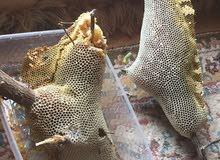عسل للبيع (برم) طبيعي واصلي مضمون