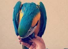 توصيل طيور وحيوانات