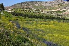أرض زراعية من المالك للبيع في وادي شعيب