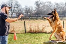 dog trainer مدرب كلاب