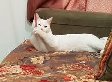 قطة عمرها 9 شهور