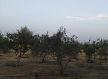 امتلك مزرعه ملك مسجل عقد اخضر مشجره زيتون يطرح سنويا بطريق اسيوط الغربي