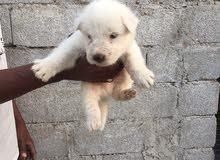 كلب عمره شهرين