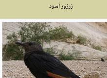 طيور زرزور