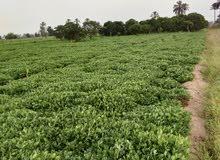 أرض زراعية للبيع تصلح لجميع المشاريع 30قيراط عقد اخضر بأسم الجد بجوار طريق دولى