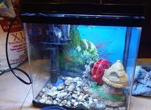 Aquarium Tank with Filter, Light and 2 Gold Fish