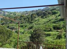 قبيع جبل لبنان