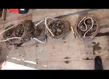 أدوات غوص  ( الديين صناعة يدوية )