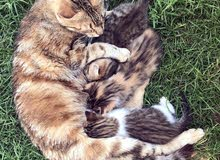 3 chatons et une maman à adopter
