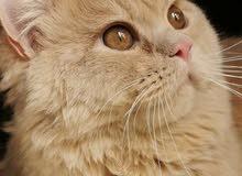 متاح قط جميل ونظيف جدا