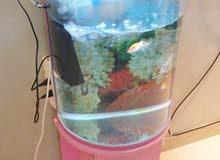 حوض أسماك مع السمك 35دينار للتواصل