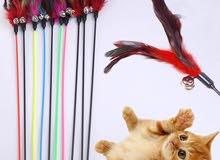 ريشة لعب القطط