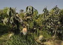 امتلك مزرعه نيلي علي بعد 30 دقيقه من الهرم 40 فدان