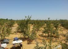 7.5 فدان أرض زراعية