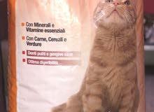 اكل قطط فيتا وبلاكي