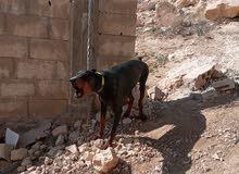 عمان الهاسمي الشمالي