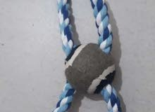 pet toys at affordable prices