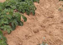 للايجار3 فدان ( يصلحو لكل الاغراض زراعه وتربيه  (ك76مصر اسكندريه الصحراوي