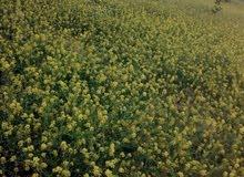 ارض للبيع في ذيبان تربة حمراء مزروعة مشيكة وبها خزان ماء ونظام ري بلتنقيط