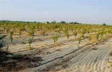 للجادين ومحبي الريف والاستسمار الزراعي امتلك مزرعه للبيع 40 فدان للتجزئه حتي 5 فدان وتروي من مصدر زى