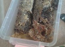 عسل بالشمعة طبيعي من مزارع القبة متوفر بكميات محدودة .