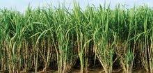 ارض زراعية خصبة في مصر 13 فدان للبيع