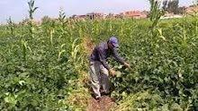 عامل زراعة