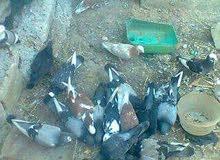 مطلوب حمام بلدي الجوز على دينارين (مطلوب) داخل محافظة جرش