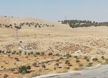 أرض للبيع في بيرين باسكان دكاترة الجامعة الأردنية مميزة بسعر مغري