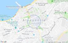 الاسكندرية المعمورة البلد