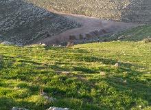 اربعه دنم على شارعين رأس قمه مستويه مطله على جبال فلسطين مسنسله مرتفعه جميله