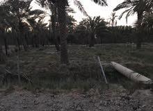 قطعة ارض للبيع في ابو الخصيب