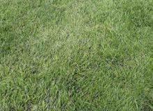 عشب طبيعي للبيع (معشب)
